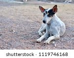 blur picture of alone dog lie... | Shutterstock . vector #1119746168