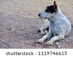 blur picture of alone dog lie... | Shutterstock . vector #1119746615