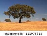 Cork Tree In Alentejo Plain ...