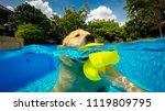 golden retriever  dog ...   Shutterstock . vector #1119809795