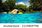 golden retriever  dog ...   Shutterstock . vector #1119809798
