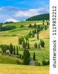 cypress tree scenic winding... | Shutterstock . vector #1119852212