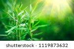 fresh rosemary herb grow... | Shutterstock . vector #1119873632