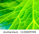 blurred photo green leaves...   Shutterstock . vector #1120009598