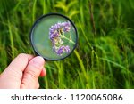 hand with a magnifying glass on ...   Shutterstock . vector #1120065086