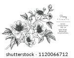 sketch floral botany collection.... | Shutterstock .eps vector #1120066712