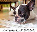 French Bulldog Black And White...