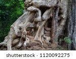 tropical tree in stone ruin of...   Shutterstock . vector #1120092275