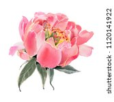 watercolor  flowers isolated on ... | Shutterstock . vector #1120141922