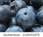 macro photo of bilberries  ...   Shutterstock . vector #1120151372