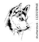 dog husky hand drawn ink on... | Shutterstock . vector #1120158968
