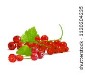 fresh  nutritious and tasty red ... | Shutterstock .eps vector #1120204235