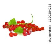 fresh  nutritious and tasty red ... | Shutterstock .eps vector #1120204238