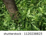 tree covered in tall grass | Shutterstock . vector #1120238825