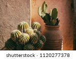 paddle and barrel cacti in... | Shutterstock . vector #1120277378
