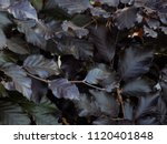 closeup of densely packed... | Shutterstock . vector #1120401848