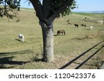 horses at a pasture | Shutterstock . vector #1120423376