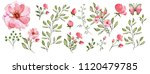 watercolor illustration.... | Shutterstock . vector #1120479785