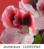 isolated image of flower closeup | Shutterstock . vector #1120525565