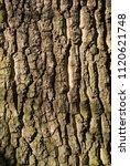 brown tree bark texture  rough... | Shutterstock . vector #1120621748