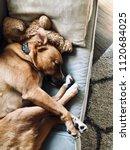 sleepy dog snuggled up on sofa... | Shutterstock . vector #1120684025