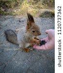 squirrel eats sunflower seeds | Shutterstock . vector #1120737362