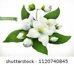 jasmine. 3d realistic vector... | Shutterstock .eps vector #1120740845