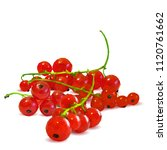 fresh  nutritious and tasty red ... | Shutterstock .eps vector #1120761662