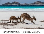 kangaroos on the beach with... | Shutterstock . vector #1120793192