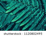 fern leaf  dark blue toned | Shutterstock . vector #1120802495