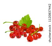 fresh  nutritious and tasty red ... | Shutterstock .eps vector #1120837442