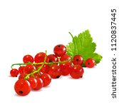 fresh  nutritious and tasty red ... | Shutterstock .eps vector #1120837445