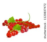 fresh  nutritious and tasty red ... | Shutterstock .eps vector #1120837472