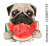 Stock vector funny pug dog eating watermelon illustration 1120857725