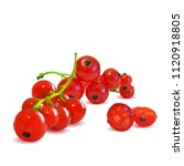 fresh  nutritious and tasty red ... | Shutterstock .eps vector #1120918805