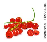 fresh  nutritious and tasty red ... | Shutterstock .eps vector #1120918808