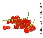 fresh  nutritious and tasty red ... | Shutterstock .eps vector #1120918832