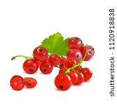 fresh  nutritious and tasty red ... | Shutterstock .eps vector #1120918838