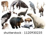 assortment of many north... | Shutterstock . vector #1120930235