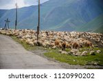 a flock of sheep close to the... | Shutterstock . vector #1120990202