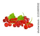 fresh  nutritious and tasty red ... | Shutterstock .eps vector #1121005532