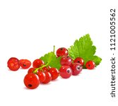 fresh  nutritious and tasty red ... | Shutterstock .eps vector #1121005562