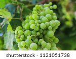 Bunch Of Ripe Green Grapes...