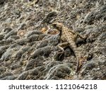lizard on the stone at... | Shutterstock . vector #1121064218