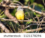 closeup of colorful yellow and... | Shutterstock . vector #1121178296