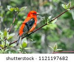 closeup of a tired colorful red ... | Shutterstock . vector #1121197682