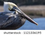 Pelican Sitting On A Post In...
