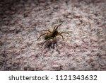 Tiny Carpet Spider