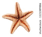 starfish isolated on white...   Shutterstock . vector #1121389886