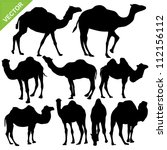 Camels Silhouettes Vector